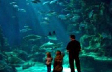 L'Aquarium Mare Nostrum