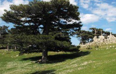 La Forêt de Bavella
