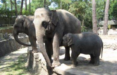 Le Zoo de la Palmyre
