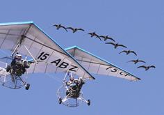 Voler avec les oiseaux