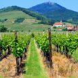 route-vins