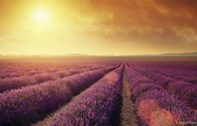 Provence - le paradis de la lavande