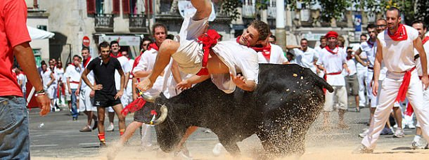 fetes-de-bayonne-course-vaches